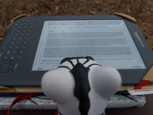 Barcode reading a journal article on Kindle - waiting for dwarf mongoose to get up