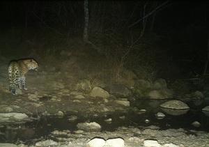 The leopard at UmPhafa Private Nature Reserve (Sept '11)