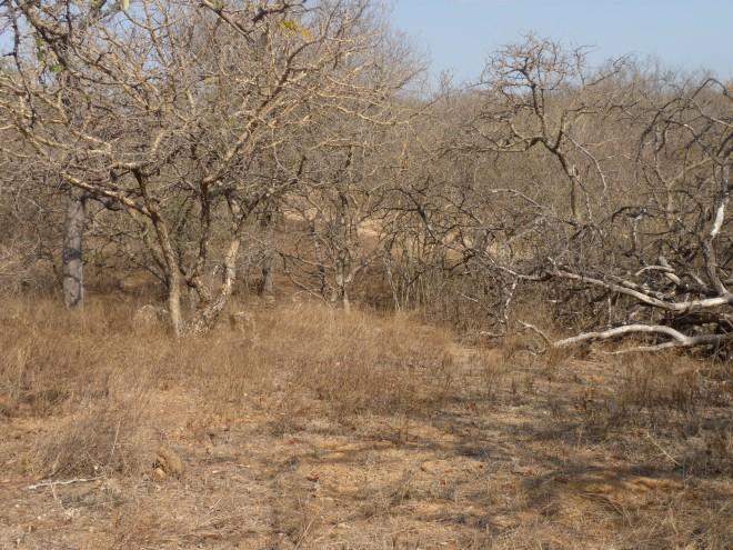 Spot The Mongoose - Level: Medium