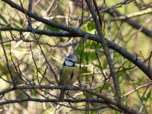 Everyone loves a blue tit