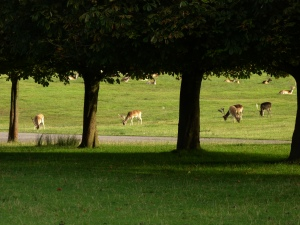 One of my favourite photos, well done to the deer for lining up nicely