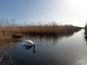 A lovely photo from Lodmoor