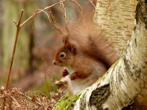 Red squirrel!!