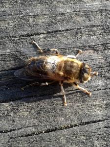 A bee!