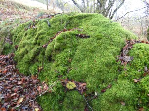 A beautiful mossy boulder