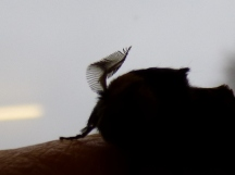 Look at how feathery its antenna is!
