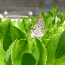 Butterfly on Grand Cayman