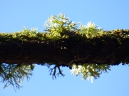 Lichen up above