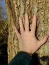 The touch of bark