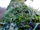 Lichen, Exhibit A