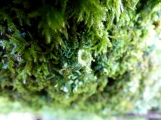 Lichen, Exhibit B