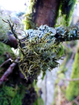 Lichen, Exhibit C