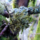 Lichen, Exhibit C