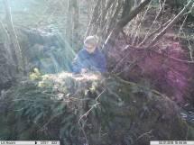 Camera trap image