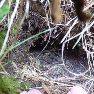 Bumblebee nesting site