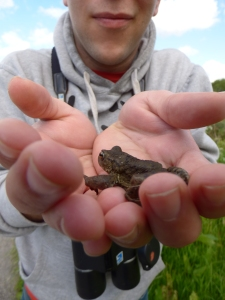 Oh and here's a toad I rescued