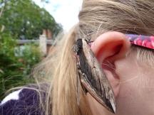 Privet Hawk-moth (Sphinx ligustri) as an earring?
