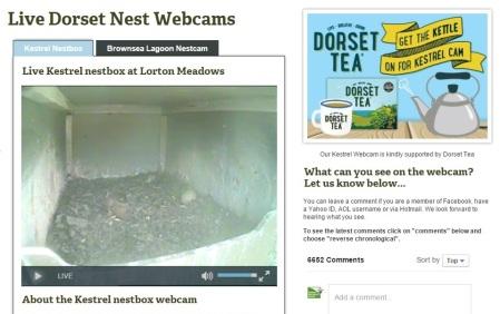 An empty nestbox!