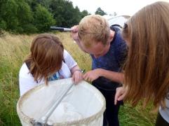 Examining the sweep net