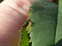 Tiny caterpillar