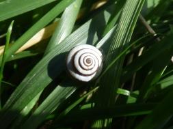 A beautiful snail shell