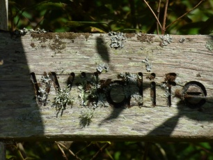 Lichen on the sign