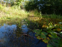 The pond at Lorton