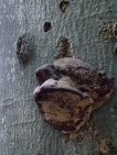 What do you think this fungus looks like?