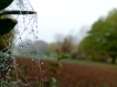 Dew-covered spiderweb