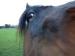 A curious pony