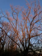 Sunset on branches